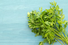 Parsley branch. On a blue wooden background Stock Photo