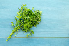 Parsley branch Stock Images