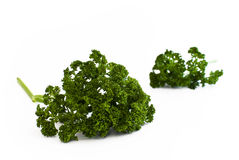 Parsley bunch. Two bunch of parsley on white background royalty free stock images