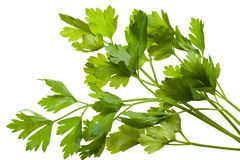 Parsley bunch Royalty Free Stock Photos