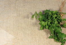 Parsley. Bunch fresh parsley on linen fabric texture royalty free stock images
