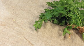 Parsley. Bunch fresh parsley on linen fabric texture royalty free stock photography