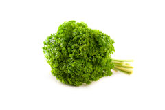 Parsley bunch isolated on white background Stock Photography