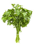 Parsley bunch Royalty Free Stock Images
