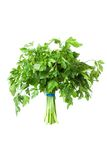 Parsley bunch, seasoning Royalty Free Stock Photography