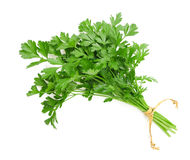 Parsley bunch. Tied with ribbon isolated on white background Royalty Free Stock Image