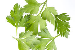 Parsley bunch  on white, top view Stock Image