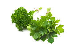Parsley. Bunches of fresh parsley isolated on a white background Royalty Free Stock Photo