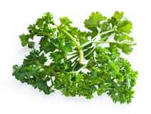 Parsley bush Royalty Free Stock Image