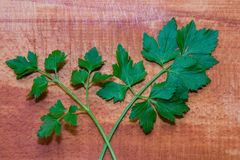 Parsley and celery. On a wooden board Stock Photos