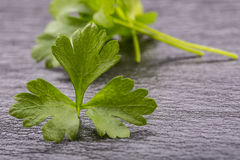 Parsley or celery twig. Fresh parsley top on granite board. Stock Image