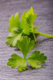 Parsley or celery twig. Fresh parsley top on granite board. Royalty Free Stock Photography