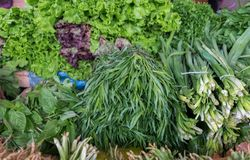 Parsley, cilantro, tarragon, basil, mint, green onions and dill. For sale stock photography