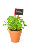 Parsley in a clay pot with a label Stock Photos