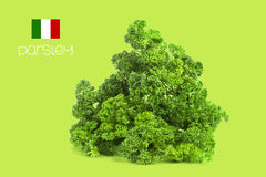 Parsley. With clipping path, Freh Royalty Free Stock Image