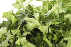 Parsley in close up Stock Photo