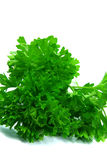 Parsley close-up 2. Close-up view on some fresh parsley isolated Royalty Free Stock Images