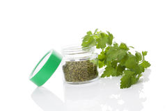 Parsley, culinary aromatic herbs. Royalty Free Stock Images