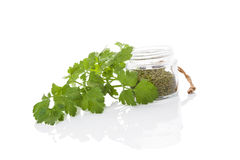 Parsley, culinary aromatic herbs. Royalty Free Stock Photos