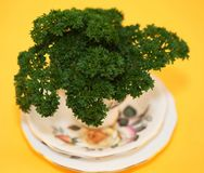 Parsley in a cup Royalty Free Stock Photos