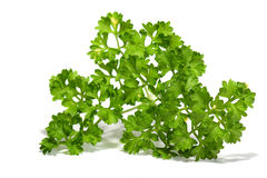 Parsley D Royalty Free Stock Image