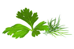 Parsley and Dill. On white background Royalty Free Stock Photos