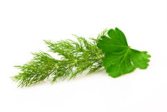 Parsley and dill Stock Image