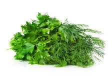 Parsley, dill, bunch Stock Images