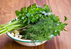Parsley dill and garlic Royalty Free Stock Photos
