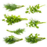 Parsley and dill isolated on white background Royalty Free Stock Photo