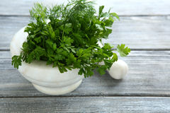 Parsley and dill in a mortar Stock Image