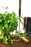 Parsley, earth with garden tools and boots Royalty Free Stock Photography