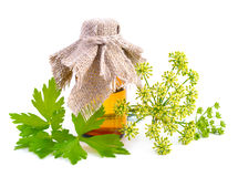 Parsley essential oil on pharmaceutical bottle. Royalty Free Stock Photo