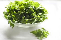 Parsley. Fresh parsley ready to blenderize stock photography