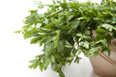 Parsley freshly in the pot Royalty Free Stock Photos