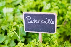 Parsley german: Petersilie sign closeup on food market.  stock images