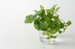 Parsley in glass Stock Photography
