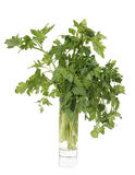 Parsley in glass Stock Photo