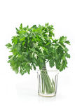 Parsley in glass of water Stock Photography