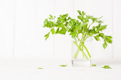 Parsley in a glass with water on a white background. Place for the text. Side view Royalty Free Stock Images
