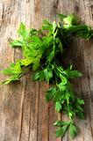 Parsley green condiments for cooking Stock Photography