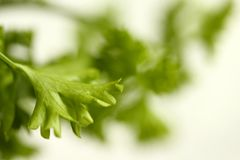 Parsley green stock photography