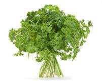 Parsley herb Royalty Free Stock Images