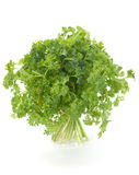 Parsley herb Royalty Free Stock Photography
