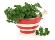 Parsley Herb Stock Image