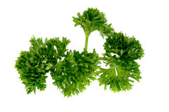 Parsley herb Stock Photos