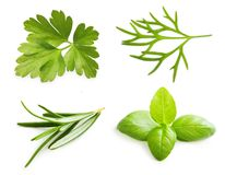 Parsley Herb, Basil Leaves, Dill, Rosemary Spice Stock Image
