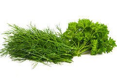 Parsley herb isolated Stock Image