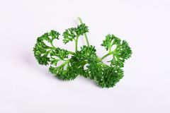 Parsley herb isolated. On white background royalty free stock images
