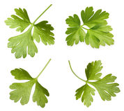 Parsley herb isolated Royalty Free Stock Photography